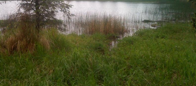Johnson Lake SRA Campground Improvements Phase 1